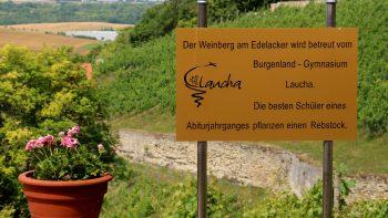 Permalink zu:Weinbau…
